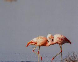 """Muestra fotográfica """"Picos y plumas"""""""